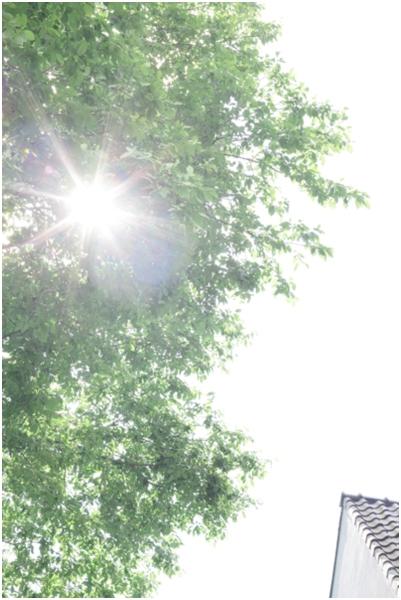 2014-07-08_0020.jpg